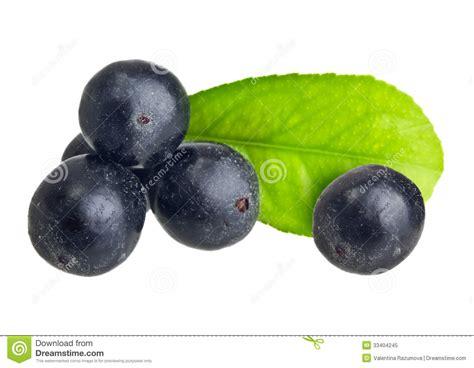 amazon berries amazon acai fruit with leaf royalty free stock photo