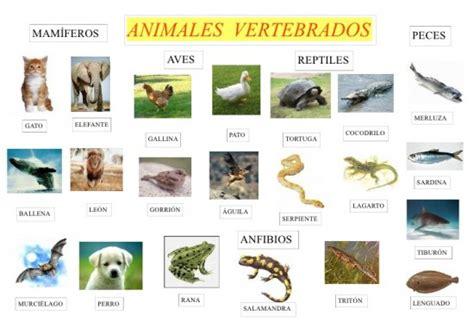 imagenes animales vertebrados e invertebrados para imprimir im 225 genes de animales vertebrados im 225 genes