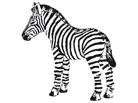 baby zebra coloring page free coloring pages of cute baby zebra