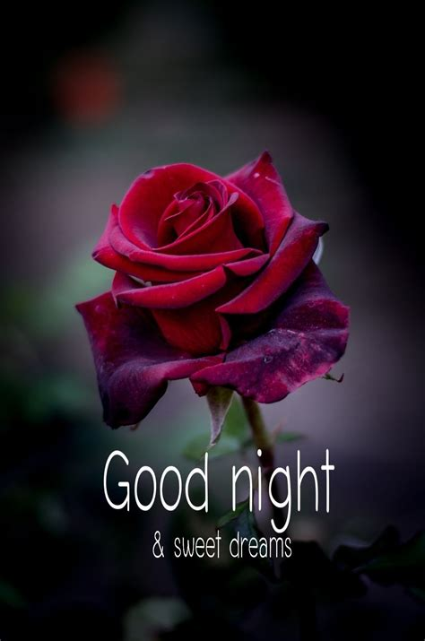 sweetest dreams good nite good night good night