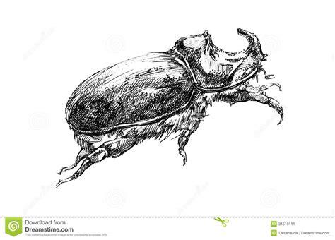 Rhino Artwork by Rhinoceros Beetle Graphic Illustration Sketch Stock Image