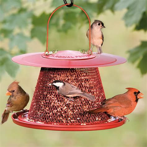 cardinal no no feeder
