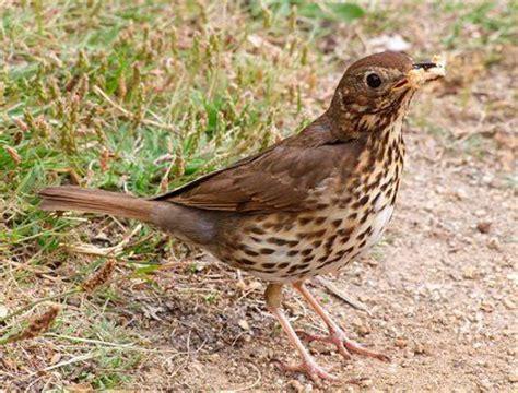 backyard birds plymouth mi fishnhunt new zealands and fishing forum