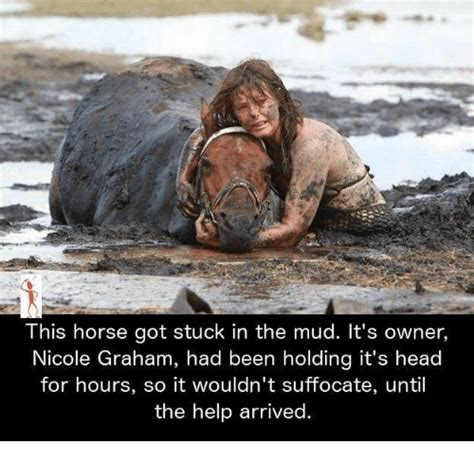 jeep stuck in mud meme this horse got stuck in the mud it s owner nicole graham