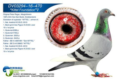 Foundation Pigeon kittel foundation european pigeon website