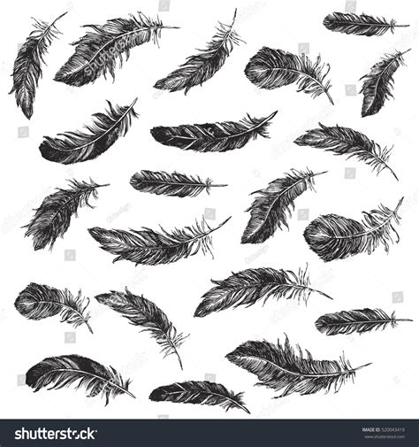 black and white feather pattern vector black white feather pattern stock vector 520043419