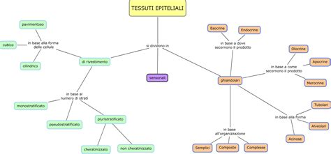 senso di bagnato prima ciclo epiteliali scuolanatomia