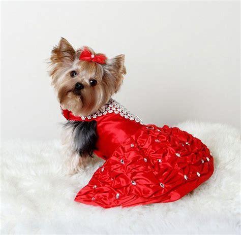 imagenes de invierno con animales moda atuendos para perros 2013