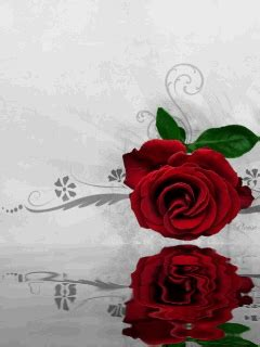 animated red rose mobile phone wallpapers  mobile