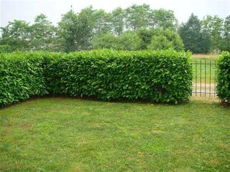 potatura piante da giardino quando potare la siepe potatura consigli per potare la