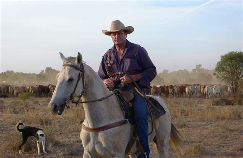 Australian Cattle Cowboys | for rookie cowboys snakes and aches driving cattle on the