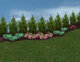 green tree landscaping privacy trees and hedges in the landscape the planting