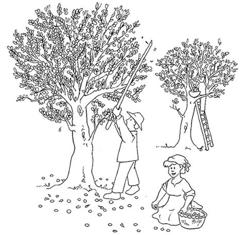 coloring page of olive tree olive tree coloring coloring pages