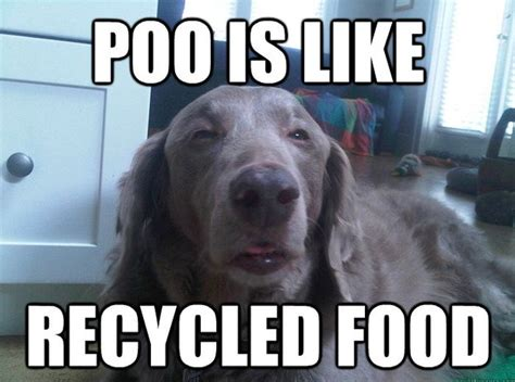 Funny Hilarious Memes - funny dog memes fun
