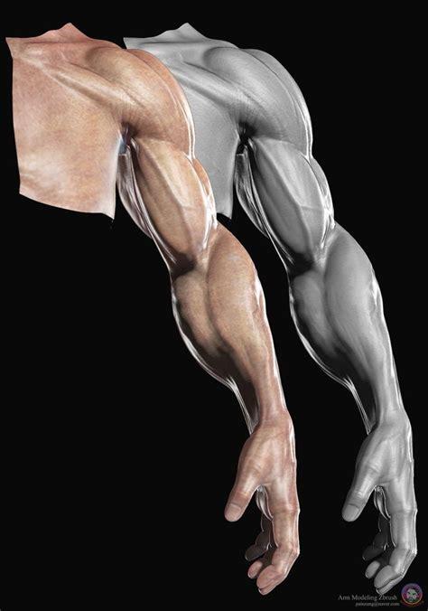 zbrush arm tutorial 228 best zbrush anatomy images on pinterest zbrush