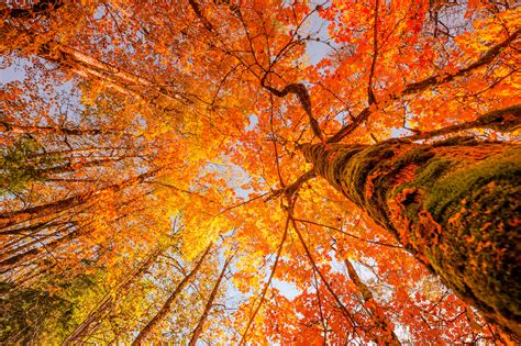 fall colors 2017 5 magnificent sights to view stunning fall foliage in westchester new york luxury white