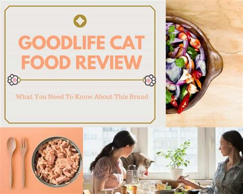 goodlife cat food review what you need to know about this brand tinpaw