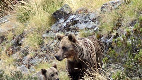 hombres osos facebook hombres osos facebook las mujeres y los hombres que amana
