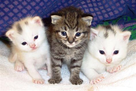 Keranjang Untuk Kucing merawat anak kucing sejak baru lahir
