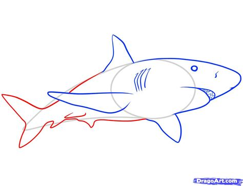 free draw how to draw a tiger shark step by step archives drawings