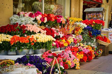 sfondilandia fiori costa azzurra camargue e provenza no ordinary