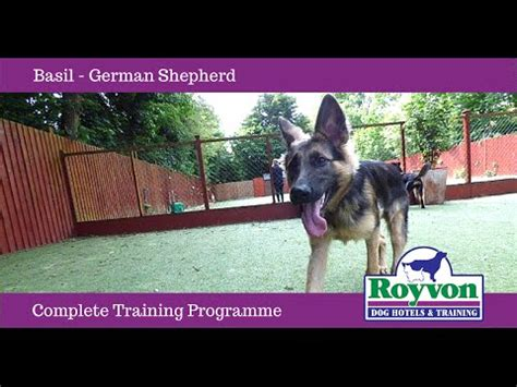 how to stop a german shepherd puppy from biting jumping funnydog tv