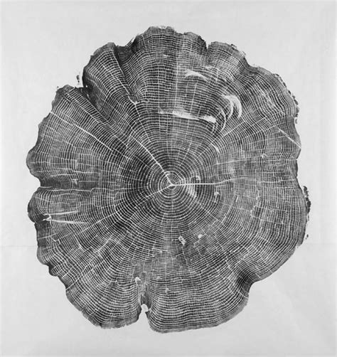 tree cross section covered in ink cross sections of trees make gorgeous