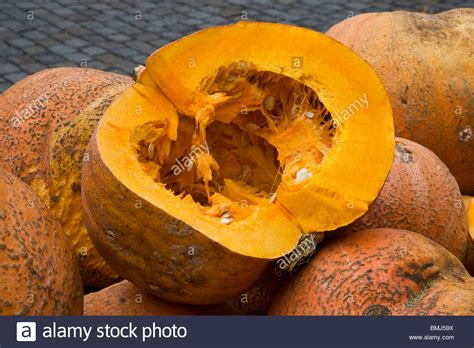 pumpkin is the fruit of the species cucurbita pepo or