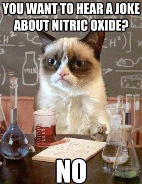 Popular Cat Memes - top 25 grumpy cat memes cattime