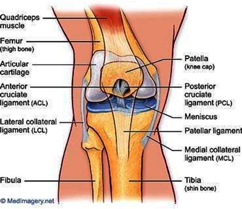 torn acl heal on its own acl partial tear recovery time things you didn t