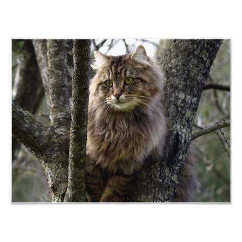 Tabby Meme - long haired tabby cat memes