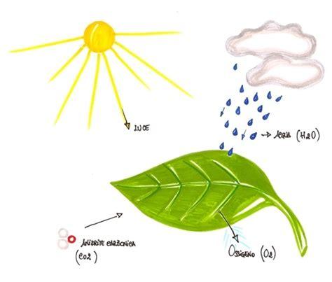 reazioni chimiche in cucina fotosintesi importanza della fotosintesi reazioni
