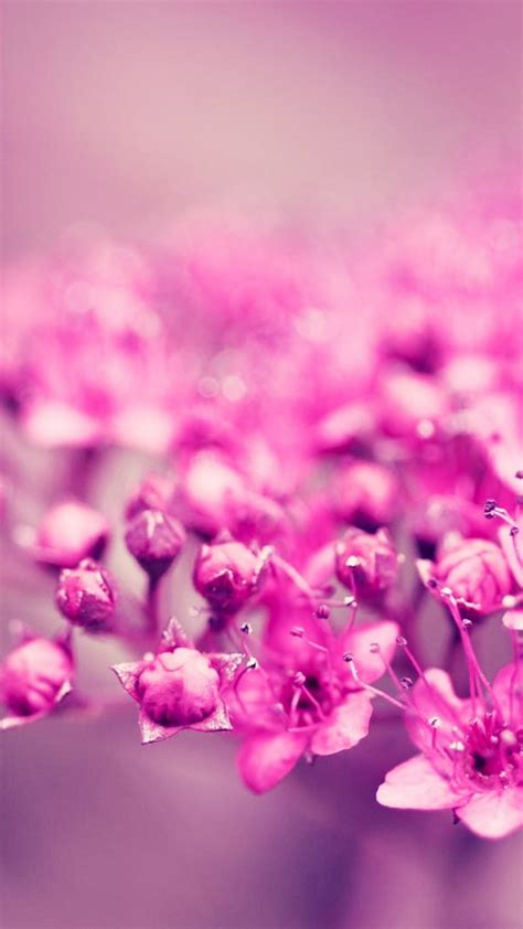 wallpaper summer pink pink flowers summer best htc one wallpapers