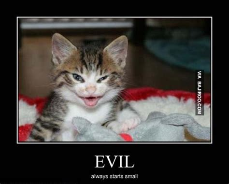 Cat Interesting Meme - devil cat is watching you 18 photos