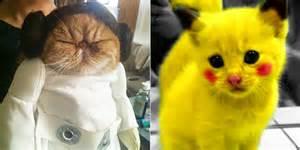 Halloween Pokemon Costumes Les Meilleurs Costumes Halloween Pour Nos Animaux