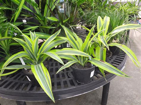 tropical plants for the garden add color to your garden with tropical plants home
