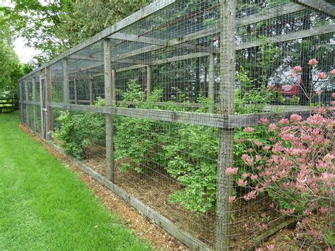 backyard berry plants cage around his blueberry bushes to thwart the birds