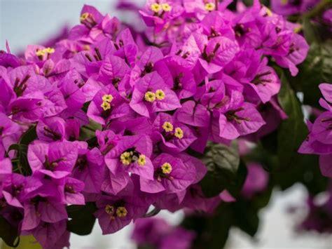 Die Schönsten Balkonpflanzen 3395 by Balkon Und Terrassenpflanzen Balkonpflanzen