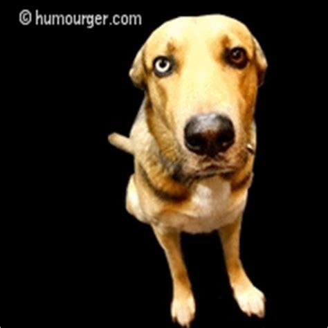 sad puppy gif pin sad doggif on
