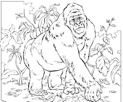 coloring page of gorilla mountain gorilla coloring pages coloring pages for kids