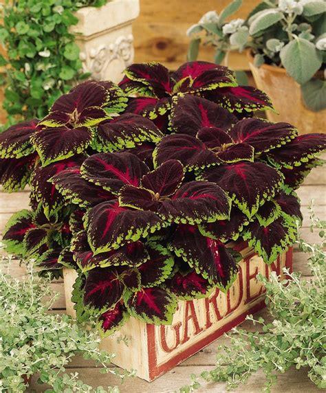 piante da ombra in vaso piante da ombra in vaso awesome piante da ufficio per