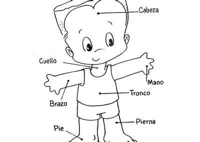 imagenes de los nombres del cuerpo humano en ingles dibujos del cuerpo humano 174 para colorear e imprimir