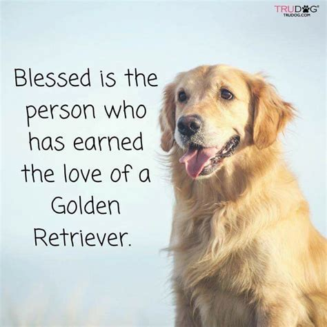 southern golden retrievers golden retriever rescue of southern maryland
