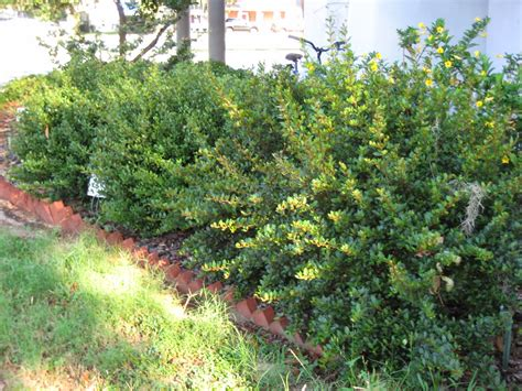 For More Native Shrubs For Central Florida Download Our Florida Landscape Plants