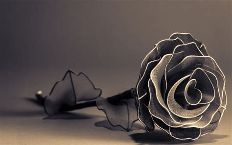 wallpaper black and white roses black and white rose wallpaper 27 wide wallpaper