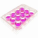 Cell Culture Plate | 600 x 600 png 303kB