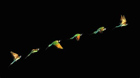 wallpaper dark bird birds hd 1920x1080