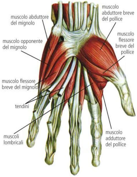 come farsi i muscoli a casa le 3 regole per la crescita muscolare da