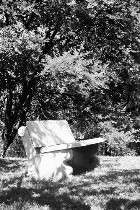 bench under tree bench under tree in black white free stock photo