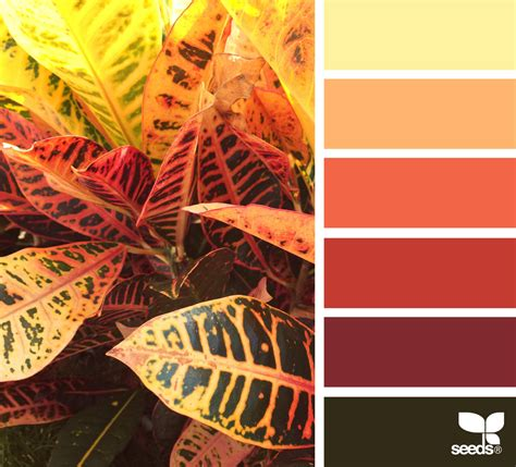 autumn color autumn color design seeds